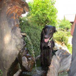 Wasser ist mein Elemen,denkt Bagheera