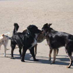 Andere Hunde wurden sehr unter die Lupe genommen