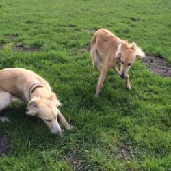 Poni und seine Schwester Lilu.