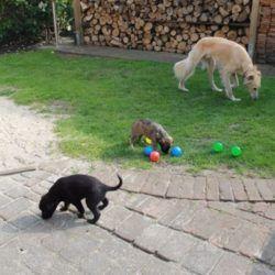 Erster kleiner Ausflug in den Garten.