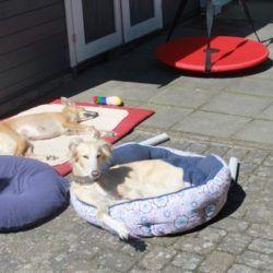 Pooohhhh,Mittagspause! Yasu und Poni  gönnen sich ein Sonnenbad!