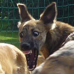 Ich hab die Zähne schön...ich hab die...