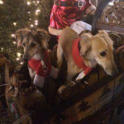 Pearl und Lilu (Aively) auf dem Weihnachtsmarkt