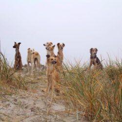 Die Windsprite Bande