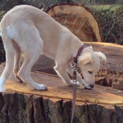 Kima untersucht erst einmal den Baum!