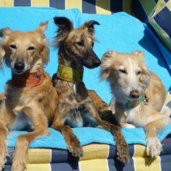Die 3 Hippies!